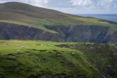 Aranmore-Cliffs-with-Sheep-scaled