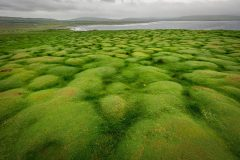 Green-Mounds-at-Downpatrick-Head-scaled