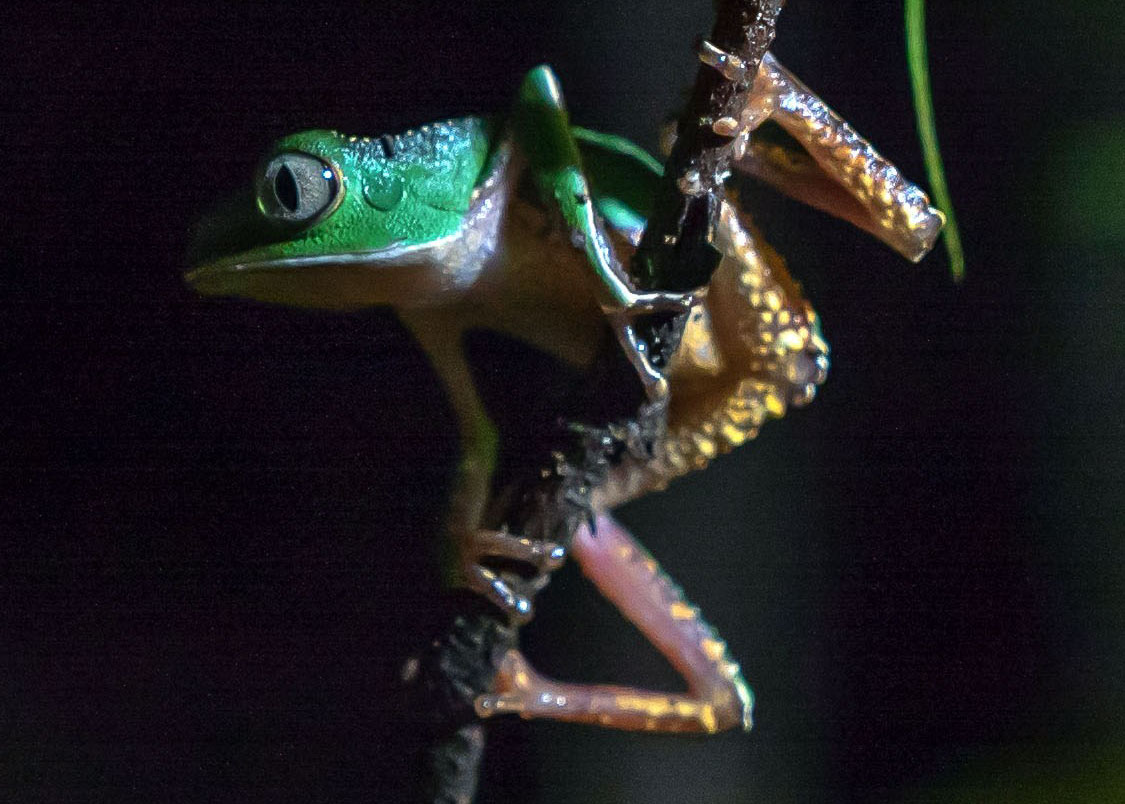 Scouting Expedition in the Amazon Rainforest of Ecuador